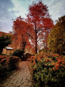 Ócsai Református Műemléktemplom ősszel